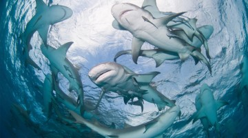 Thoughts on Entrepreneurship, Shark Tank TV Show