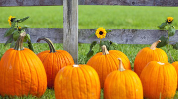 Gearing up Your Small Business for Fall
