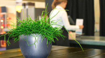 """5 Easy Ways to """"Green"""" Your Small Business"""