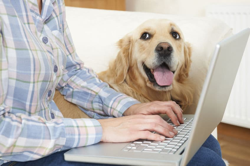 5 Ways that Pets Can Reduce Your Work Stress
