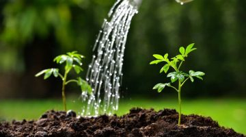 Tips for Sustaining Your Growth Post Lockdown