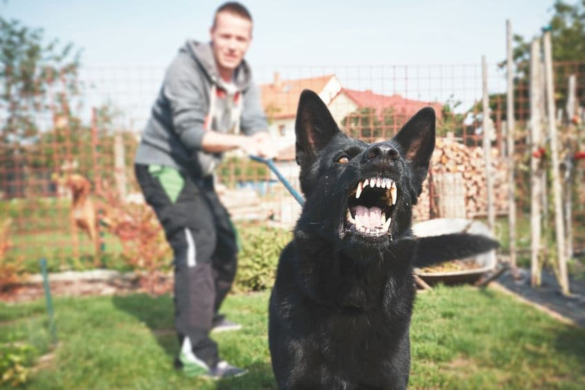 What to Consider Before Filing a Dog Bite Lawsuit?