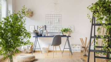 Why You Need Plants in Your Home Office