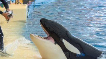 Two Talented Members Added to SeaWorld Board of Directors