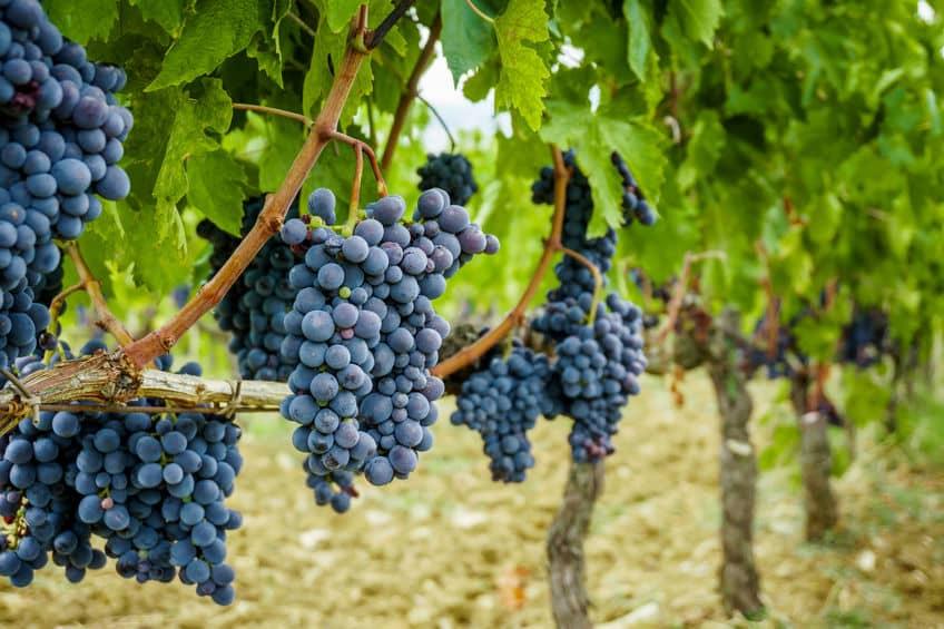 How to Run a Vineyard Resort