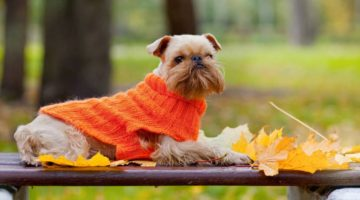5 Essential Copywriting Tips for Your New Line of Pet Apparel