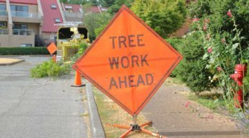 5 Risks Tree Trimmer Businesses Need to Be Aware Of